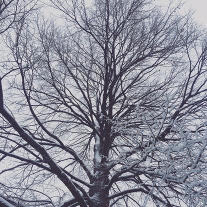 Tree of life - philosophy
