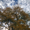 Tree - Fall - Leaves
